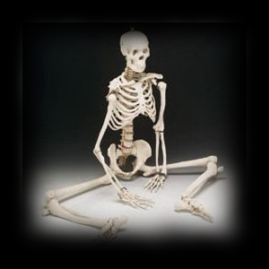 Realistic Life Sized Skeleton Halloween Prop