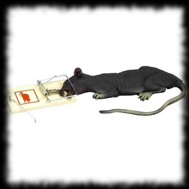 Animated rat in a trap Halloween creepy prank idea